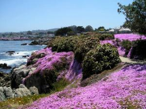 Spring on the Coast, Pacific Grove                                                                                                                                            April, 2007